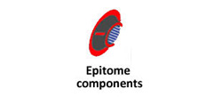EPITOME COMPONENTS